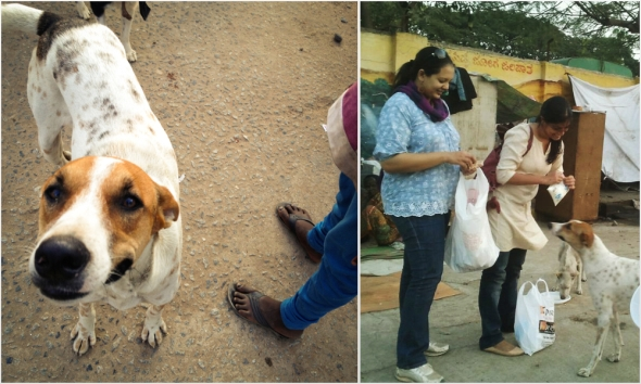 Gentle Tommy boy was one of our star dogs ! (L) ; Shreyas & Ramya talk ...