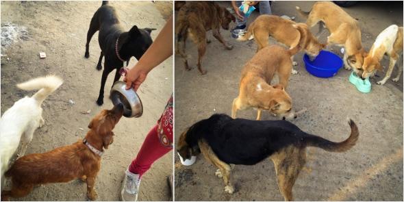 feeding2